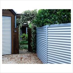 corregated metal fence | GAP Photos - Garden & Plant Picture Library - Corrugated metal fencing ...