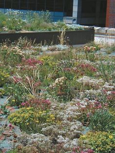 Not-So-Secret Green Roof Gardens