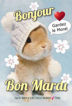 Le Moral, Bon Mardi, Good Morning, Rabbit, Teddy Bear, Facebook, Frases, Good Morning Coffee, Days Of Week