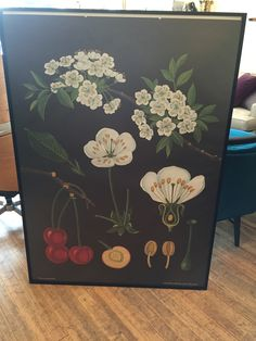 XL german cherry tree scientific poster - framed Kennett Square, Cherry Tree, Annie, German, Awesome, Classic, Frame, Fun, Poster