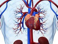 Undiagnosed Heart Condition 'AFib' May Be Common, Study Suggests - http://howtocureyou.ml/2017/08/26/undiagnosed-heart-condition-afib-may-be-common-study-suggests-2/