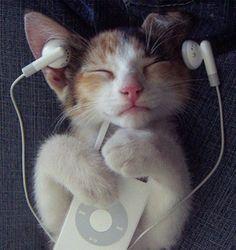 gato ouvindo música