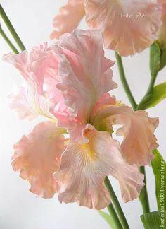 Розовые ирисы. Керамическая флористика. - кремовый,цветы,ирис,цветы из глины