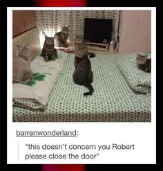 excuse me...we ar having a meowting