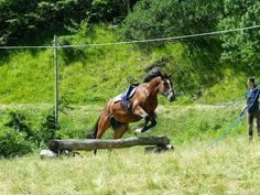 Geldings - Horse Breeders Ventasso Horse Breeds, Around The Worlds, Horses, Animals, Italia, Animales, Animaux, Horse, Animal
