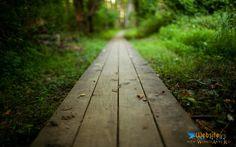 Nature wood path