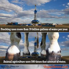 Most people agree that fracking is terrible for the environment, largely because of the tremendous amount of water it uses and pollutes. Believe it or not, animal agriculture uses 500 times as much water, and causes a rash of other environmental damage as well. #vegan #water