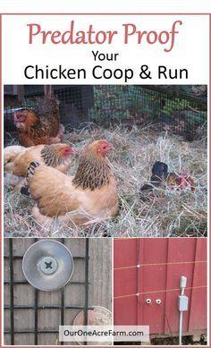 Predator proofing your chicken coop