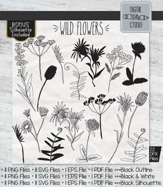 Garden Illustration, Graphic Illustration, Illustrator Cs5, Plant Vector, Outline Drawings, Black Silhouette, Flower Clipart, Vector Graphics, Ferns