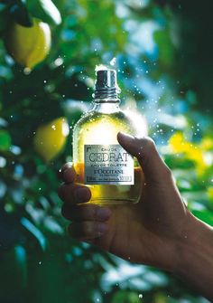 L'occitane Eau De Cedrat EDT Our window campaign 😍😎 Perfume Ad, Perfume Bottles, Flower Perfume, Occitane En Provence, Cosmetic Design, Beauty Shots, Natural Cosmetics, Commercial Photography, Hand Cream