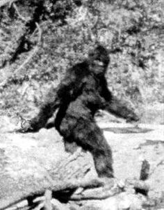 The 'Patterson Bigfoot', this female Bigfoot was filmed in blk/wht in 1967 at Willow Creek, CA, off of Hwy 299