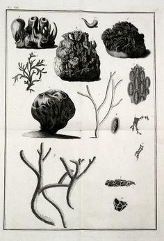 Zoologia adriatica : - Biodiversity Heritage Library