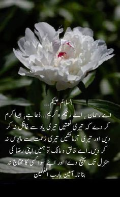 good morning quotes in urdu Good Morning Quotes Friendship, Flirty Good Morning Quotes, Positive Good Morning Quotes, Morning Prayer Quotes, Morning Quotes Images, Good Morning Inspirational Quotes, Morning Greetings Quotes, Morning Pictures, Good Morning Wishes