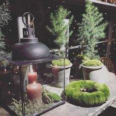 """Annica Schmidt / Grön Balans (@annicagronbalans) på Instagram: """"Pic by me, at @slottstradgarden_ulriksdal . . Snart adventskänsla. Fast ska jag vara helt ärlig har…"""" Schmidt, Christmas Inspiration, Kettle, Kitchen Appliances, Instagram Posts, Home, Ska, Diy Kitchen Appliances, Tea Pot"""
