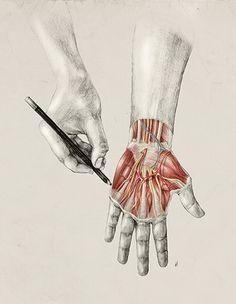 Scientific illustration by Elisa Ancori, via Behance