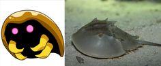 Kabuto – El cangrejo herradura del atlántico