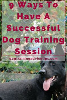 Facing difficulty training your dog? Here are 9 Ways To Have A Successful Dog Training Session. #DogsTraining