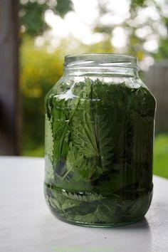 Polish Recipes, Healing Herbs, Edible Flowers, Conservation, Natural Medicine, Raw Food Recipes, Better Life, Food Storage, Food Hacks