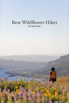 Best Hikes to See Pacific Northwest Wildflowers (Oregon and Washington) - - Summer brings the sun and wildflowers to the PNW! Here is a list of the Best Hikes to See Pacific Northwest Wildflowers in Oregon and Washington. Camping Places, Places To Travel, Travel Destinations, Tent Camping, Travel Stuff, Oregon Travel, Travel Usa, Luxury Travel, Trekking