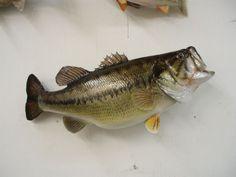 Doug Petrousek - Fish Artist