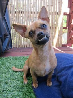"""Now that's an underbite!! Poor baby~gives meaning to """"so ugly you're cute""""!!!"""