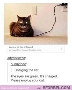 Cat charged. Let the games begin…