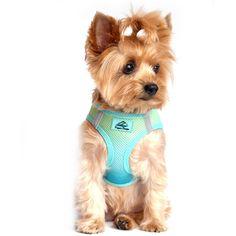 American River Small Dog Harness - Ombre Aruba Blue. Ultra-choke free design.