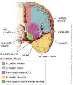 Harrisons Innere Medizin Online, 18. Auflage