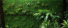 Living Wall - planted with mosses and ferns by Amphibian Designs - James Wong & David Cubero, via Flickr
