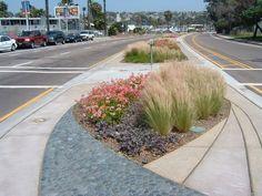 landscape median planting