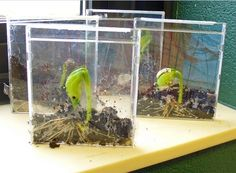 use old cd cases for seed activity