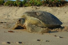 6 Things To Know As Sea Turtle Nesting Season Begins In Fort Lauderdale And Beyond