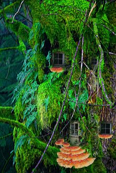 #Fairy house in tree.