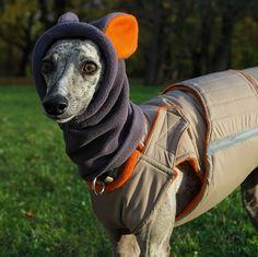 Winter dog snood with ears - fleece dog snood - dog hat / hood - MADE TO ORDER Dog Snood, Dog Winter Coat, Dog Fleece, Dog Coats, Pet Portraits, Dog Breeds, Your Dog, Dogs, Whippets