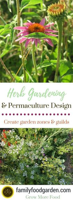 Herb Gardening and permaculture design go wonderfully together. Design your herb garden by growing herbs in permaculture garden zones. Herb Gardening is perfect for companion planting and designing…MoreMore Permaculture Design, Permaculture Garden, Herb Garden Design, Diy Herb Garden, Herbs Garden, Big Garden, Organic Gardening, Gardening Tips, Pallet Gardening