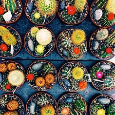 Sometimes you have to justify buying 16 mini cacti on a Friday🌵✨🤔👍🏾