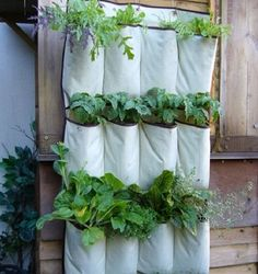 9 Out of 10 Gardeners Don't Know These Gardening Tricks – Page 3 – Fabulous 55