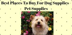 Best Places To Buy For Dog Supplies - Pet Supplies - Pets Care Tips - Pets Care Tips - Pet Fashion Cheap Pet Supplies, Online Pet Supplies, Cat Supplies, Cheap Cat Food, Dog Presents, Dog Food Online, Chicken Cages, Dog Food Brands, Best Dog Food