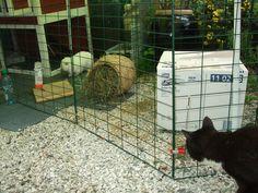 KAFORNÅKKE???? DU idag igjen ditt katteskinn!!! Gå hjem med deg! Her får du ingenting!! - WHAT!!! YOU again?? Go home Cat Skin!!! Here´s nooooooothing for you!!!! D&D by IJ 25.7.14