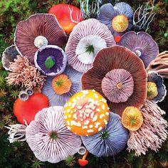 Photographer Captures Colorful Mushrooms in Vibrant Arrangements