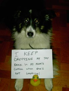 """I keep dropping my toy duck in my mom's coffee when she's not looking…"" Lmao! #dogshaming"