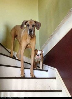 On The Stairs • from APlaceToLoveDogs.com •