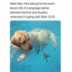 Max is a good boi