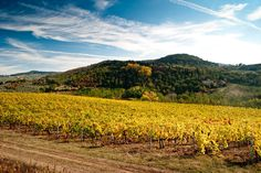 Wine tasting in Chianti vineyards, Tuscany.