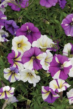 Hot Plants for a Hot Summer | Missouri Gardener eNewsletter