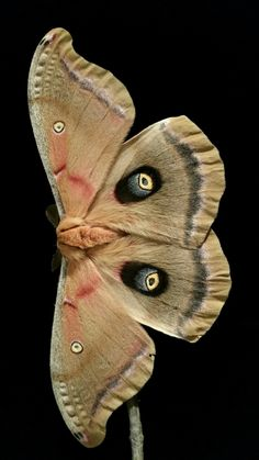 Výsledok vyhľadávania obrázkov pre dopyt moth