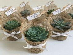 Succulent wedding favors - Succulent favors for weddings, birthdays, christenings, baby showers or any special occasion weddingfavors wedding favors ad succulent Succulent Wedding Favors, Succulent Gifts, Wedding Flowers, Wedding Plants, Succulant Wedding, Garden Wedding, Wedding Favors And Gifts, Door Gift Wedding, Weding Favors