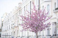 Spring in Kensington, London