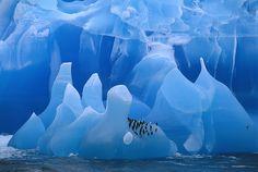 Bing fotos: Chinstrap Penguins on an iceberg in Antarctica -- Frans Lanting/Corbis © National Geographic Photographers, National Geographic Travel, Mother Earth, Mother Nature, Lago Baikal, Frans Lanting, Nature Sauvage, World Wallpaper, Wallpaper Art