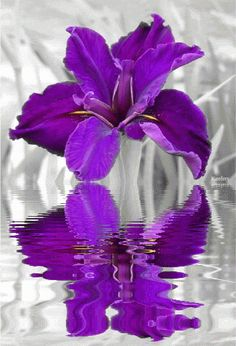 animated flower water reflections gif | , Water Reflections, Animations, Animated Gifs, Color Splash, Flowers ...